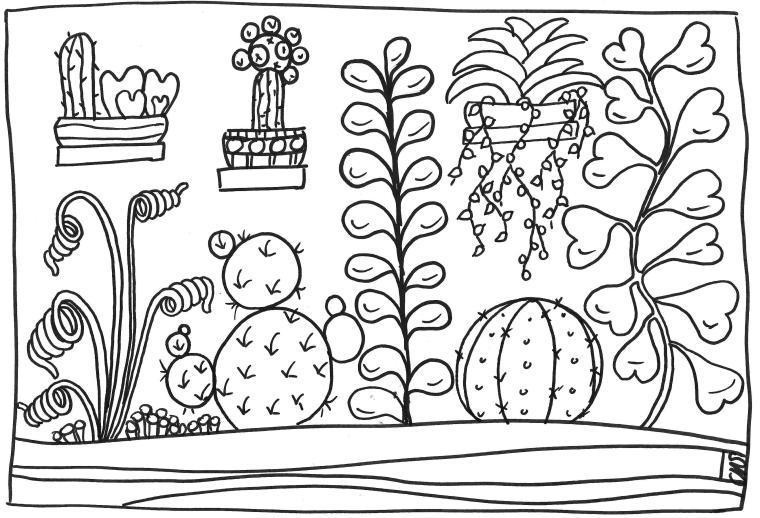 succulentes 01