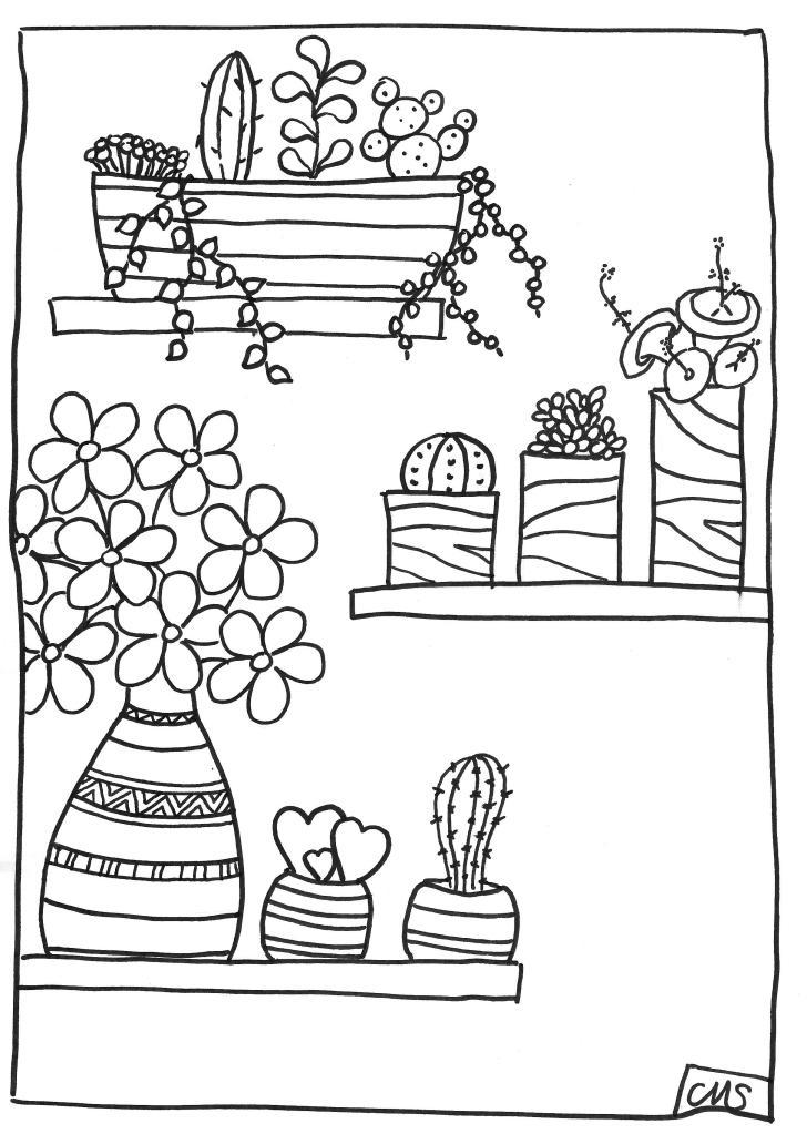 succulentes 020002