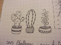 jour 1: succulentes